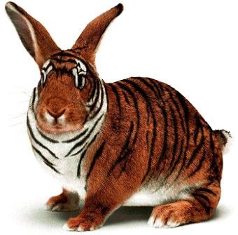 Tīģeris trusis